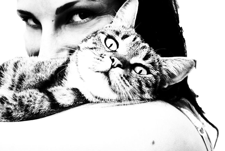 branding pet marketing flux appeal michele alise